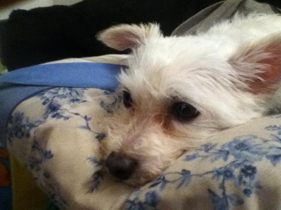 Benny (3)
